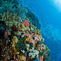 Reef Scene With Corals And Fish by Mathieu Meur