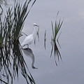 Reflecting Egret by Juan Romagosa