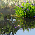 Reflecting Pond by Suzanne Gaff