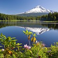 Reflection Of Mount Hood In Trillium by Craig Tuttle