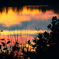 Reflection On The Lake by Robin Coaker