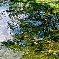 Reflection Pool by Debra     Vatalaro