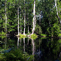 Reflections On The Ocklawaha River  by Bob Johnson
