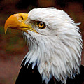 Reminiscent Bald Eagle by Donna Proctor