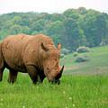 Rhino On The Hilltop by George Jones