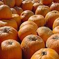 Rick's Pumpkins by Laura Corebello