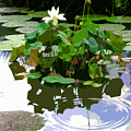 Ripples On The Lotus Pond by John Lautermilch