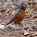 Robin by J M Farris Photography