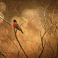 Robin by Lois Bryan