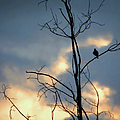 Robin Watching Sunset After The Storm by Sandi OReilly