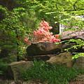 Rock Garden by Lea Novak