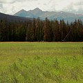 Rocky Mountain Elk by Sara Stevenson
