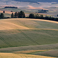 Rolling Hills Of The Palouse by Jerry McCollum