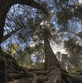 Roots by Bryan Hochman