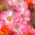 Rose 140 by Pamela Cooper