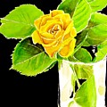Rose In Vase by Carol Blackhurst