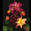 Rose by Lloyd Liebes