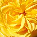 Rose Spiral Flower Garden Baslee Troutman by Baslee Troutman