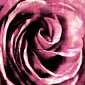 Rose Stamped by Robin Lynne Schwind