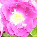 Rosegarden No. 24 by Ramon Labusch