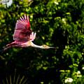 Rosie In Flight by Christopher Holmes