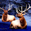 Royal Elk by Dianne Roberson