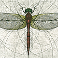 Ruby Meadowhawk Dragonfly by Charles Harden