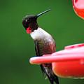 Ruby Red Throated Hummingbird On Feeder by Jai Johnson