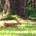 Run Bambi Run by Peg Urban