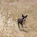 Run Puppy Run by Jez C Self