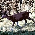 Running Deer by David Lee Thompson