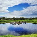 Rural Landscape by Vadzim Kandratsenkau