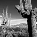 Saguaro by John Gee