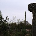 Saguaro Nightmare by Kevin Igo