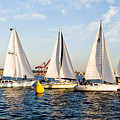 Sail Race by Tom Dowd