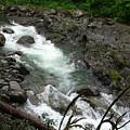 Salmon Run by TL Randleman