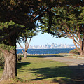San Francisco Framed By Trees by Jean Booth