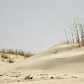 Sand Dunes And Sea Oats by Al Powell Photography USA