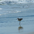 Sandpiper On The Beach by Randy Harris