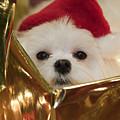 Santa Paws by Leslie Leda