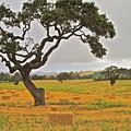 Santa Ynez Hayfield by Gus McCrea