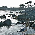 Sea Gull by Cindy Lathrop