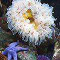 Sea Life by Marilyn Hunt