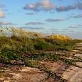 Sea Oats Along The Beach by Barbara Bowen