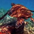 Sea Turtle On The Reef by Bette Phelan