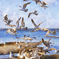 Seagull Convention by Francesa Miller