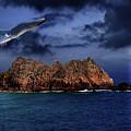 Seagull Flight by Jaroslaw Grudzinski
