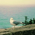 Seagull On Stone Wall by Desiree Paquette