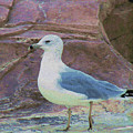 Seagull Strut by Patricia Fatta