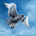 Seagull by Synnove Pettersen